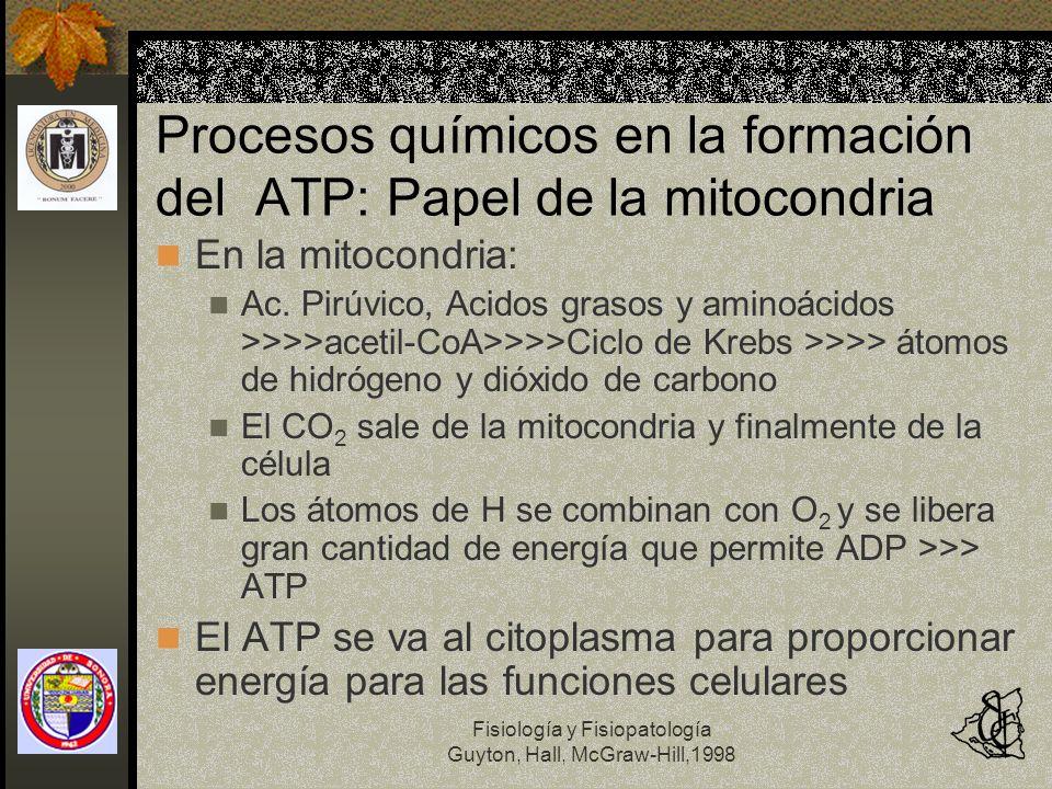Fisiología y Fisiopatología Guyton, Hall, McGraw-Hill,1998 Procesos químicos en la formación del ATP: Papel de la mitocondria En la mitocondria: Ac. P