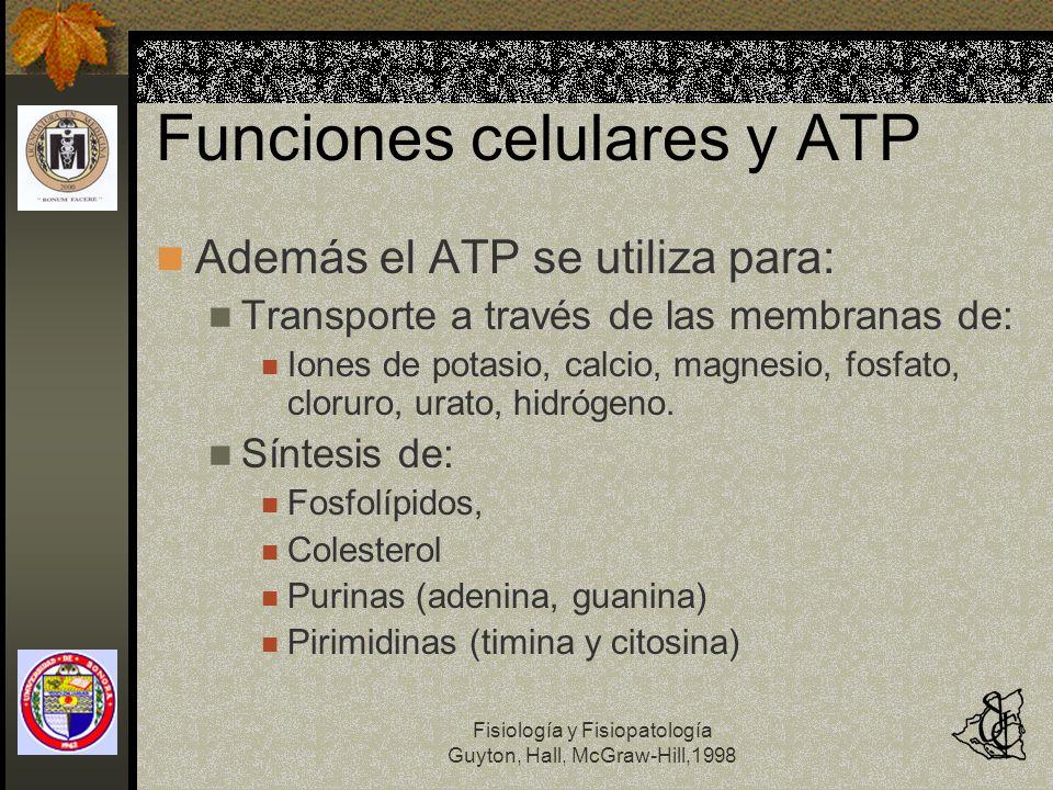 Fisiología y Fisiopatología Guyton, Hall, McGraw-Hill,1998 Funciones celulares y ATP Además el ATP se utiliza para: Transporte a través de las membran