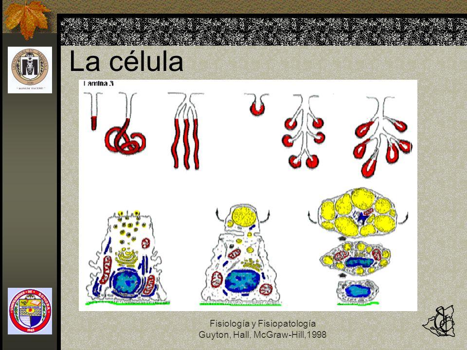 Fisiología y Fisiopatología Guyton, Hall, McGraw-Hill,1998 Organización de la célula Protoplasma: Agua Electrolitos Proteínas Estructurales Globulares Lípidos Carbohidratos
