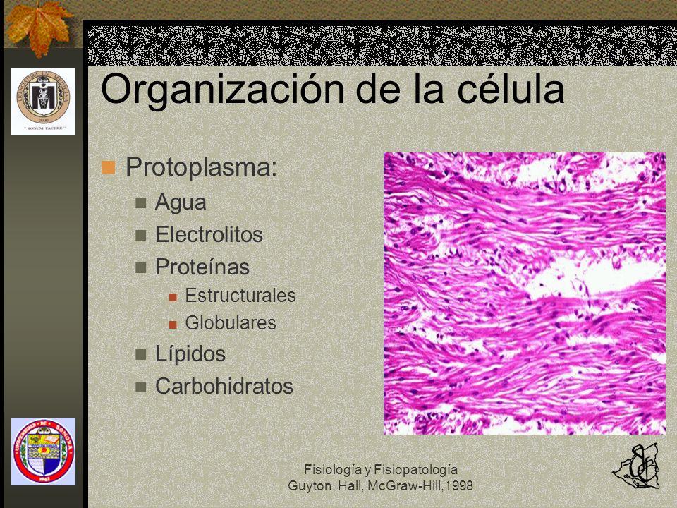 Fisiología y Fisiopatología Guyton, Hall, McGraw-Hill,1998 Organización de la célula Protoplasma: Agua: 80% Electrolitos: Potasio Magnesio Fosfato Sulfato Bicarbonato Poco: Na, Cl, Ca
