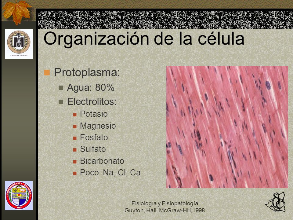 Fisiología y Fisiopatología Guyton, Hall, McGraw-Hill,1998 Organización de la célula Protoplasma: Agua: 80% Electrolitos: Potasio Magnesio Fosfato Sul
