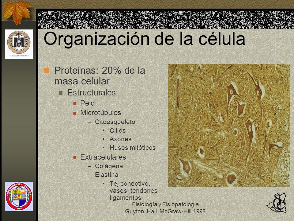 Fisiología y Fisiopatología Guyton, Hall, McGraw-Hill,1998 Organización de la célula Proteínas Globulares Enzimas En estructuras membranosas intracelulares Catalizadores Lípidos: 2% Insolubles en agua Fosfolípidos y Colesterol Triglicéridos (en los adipocitos)