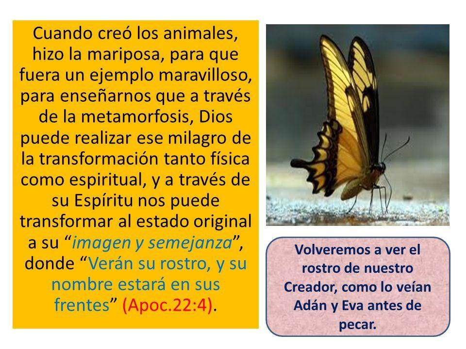 Cuando creó los animales, hizo la mariposa, para que fuera un ejemplo maravilloso, para enseñarnos que a través de la metamorfosis, Dios puede realiza