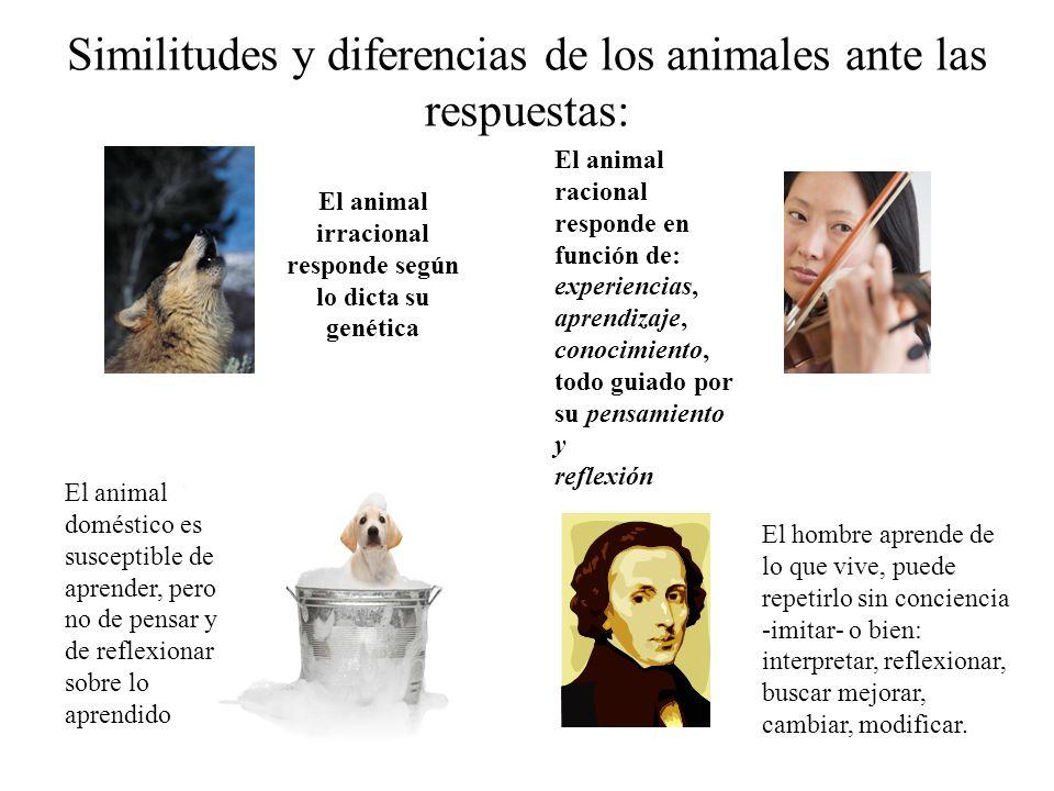 Similitudes y diferencias de los animales ante las respuestas: El animal irracional responde según lo dicta su genética El animal racional responde en