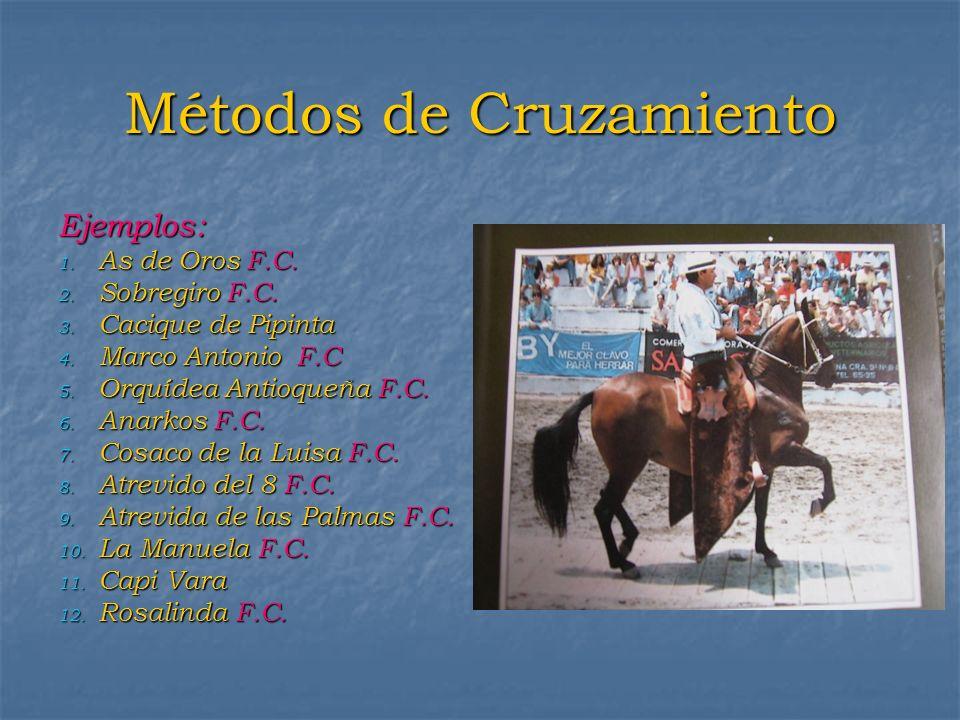 Métodos de Cruzamiento Ejemplos: 1. As de Oros F.C. 2. Sobregiro F.C. 3. Cacique de Pipinta 4. Marco Antonio F.C 5. Orquídea Antioqueña F.C. 6. Anarko