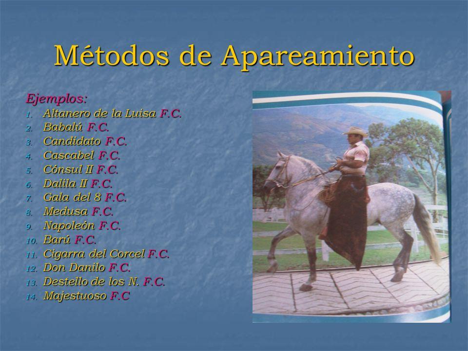 Métodos de Apareamiento Ejemplos: 1. Altanero de la Luisa F.C. 2. Babalú F.C. 3. Candidato F.C. 4. Cascabel F.C. 5. Cónsul II F.C. 6. Dalila II F.C. 7