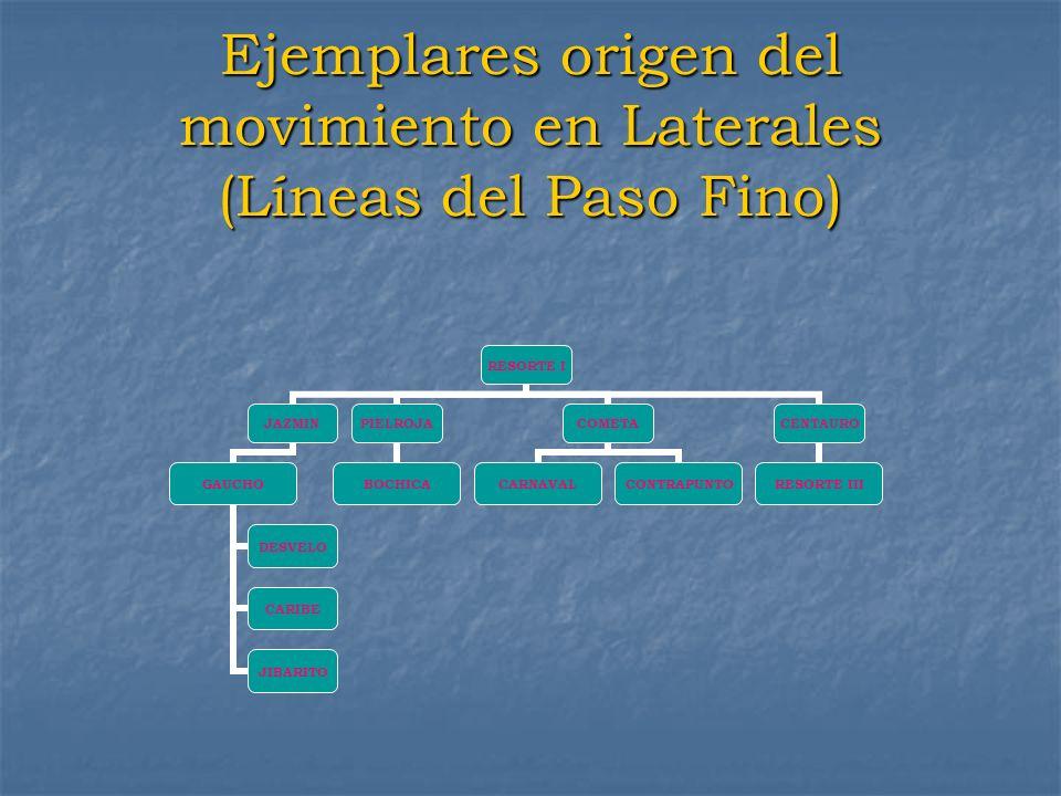 Ejemplares origen del movimiento en Laterales (Líneas del Paso Fino) RESORTE I JAZMIN GAUCHO DESVELO CARIBE JIBARITO PIELROJA BOCHICA COMETA CARNAVALC