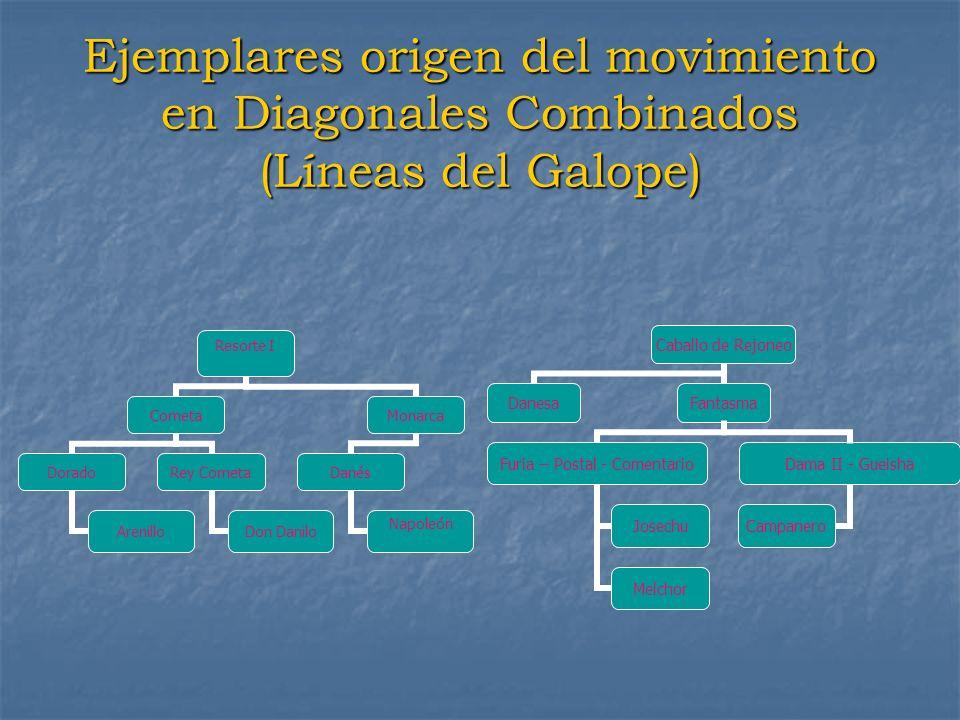 Ejemplares origen del movimiento en Diagonales Combinados (Líneas del Galope) Resorte I Cometa Dorado Arenillo Rey Cometa Don Danilo Monarca Danés Nap