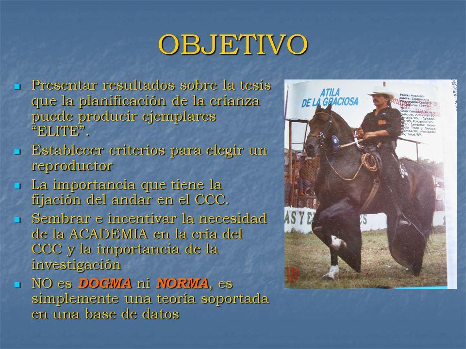 Ejemplo de la Raza Pura Sangre Inglesa El origen del caballo Pura Sangre es de tres (3) Reproductores: 1.