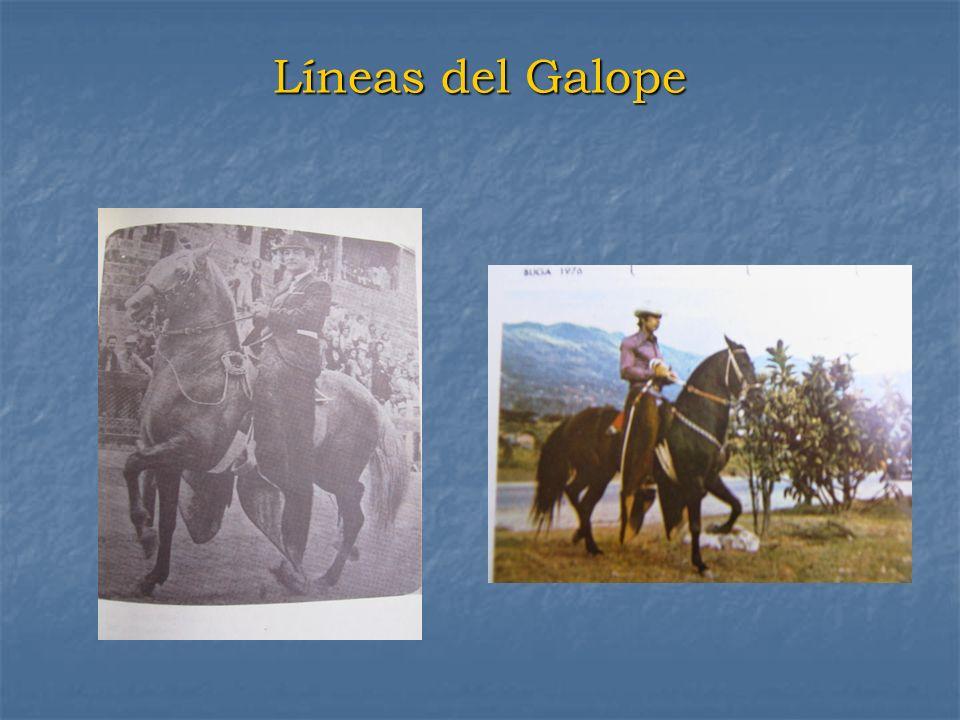 Líneas del Galope
