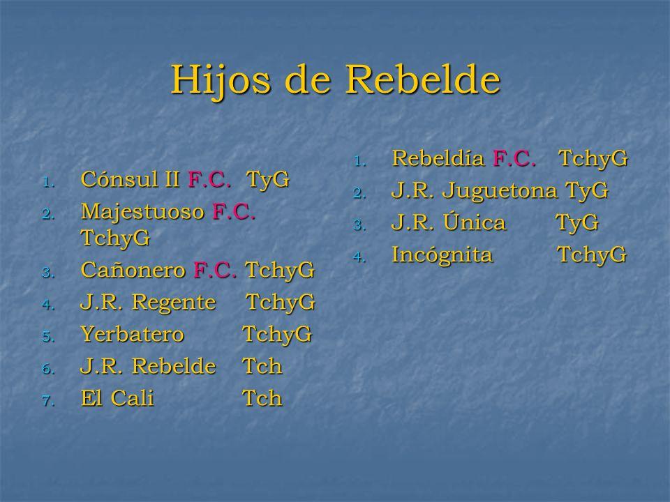 Hijos de Rebelde 1. Cónsul II F.C. TyG 2. Majestuoso F.C. TchyG 3. Cañonero F.C. TchyG 4. J.R. Regente TchyG 5. Yerbatero TchyG 6. J.R. RebeldeTch 7.