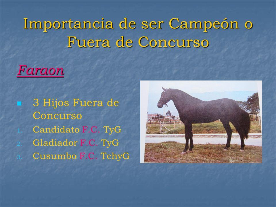 Importancia de ser Campeón o Fuera de Concurso Faraon 3 Hijos Fuera de Concurso 1. 1. Candidato F.C. TyG 2. 2. Gladiador F.C. TyG 3. 3. Cusumbo F.C. T
