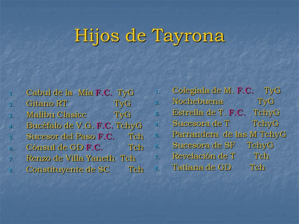 Hijos de Tayrona 1. Cabul de la Mía F.C. TyG 2. Gitano RT TyG 3. Malibu Clasicc TyG 4. Bucéfalo de V.G. F.C. TchyG 5. Sucesor del Paso F.C.Tch 6. Cóns