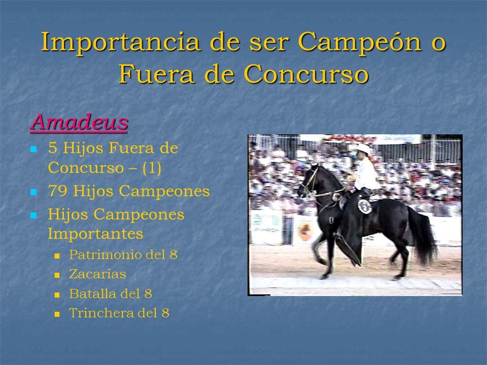 Importancia de ser Campeón o Fuera de Concurso Amadeus 5 Hijos Fuera de Concurso – (1) 79 Hijos Campeones Hijos Campeones Importantes Patrimonio del 8
