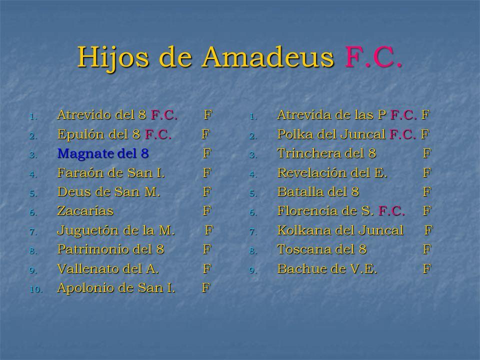 Hijos de Amadeus F.C. 1. Atrevido del 8 F.C. F 2. Epulón del 8 F.C. F 3. Magnate del 8 F 4. Faraón de San I. F 5. Deus de San M. F 6. Zacarías F 7. Ju