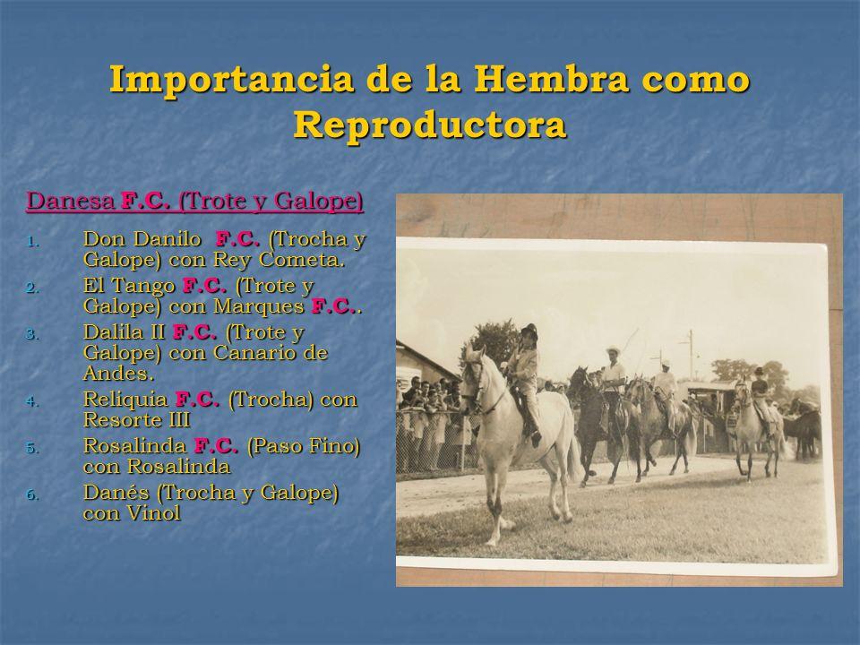 Importancia de la Hembra como Reproductora Danesa F.C. (Trote y Galope) 1. Don Danilo F.C. (Trocha y Galope) con Rey Cometa. 2. El Tango F.C. (Trote y