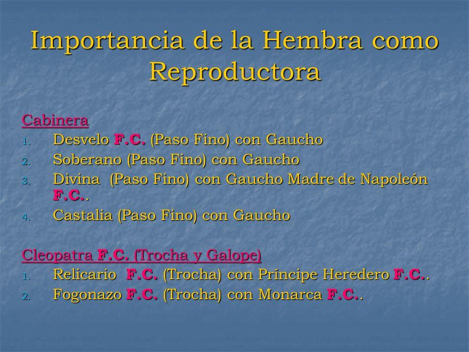 Importancia de la Hembra como Reproductora Cabinera 1. Desvelo F.C. (Paso Fino) con Gaucho 2. Soberano (Paso Fino) con Gaucho 3. Divina (Paso Fino) co