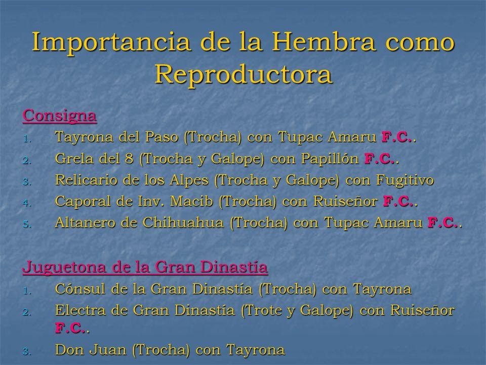 Importancia de la Hembra como Reproductora Consigna 1. Tayrona del Paso (Trocha) con Tupac Amaru F.C.. 2. Grela del 8 (Trocha y Galope) con Papillón F