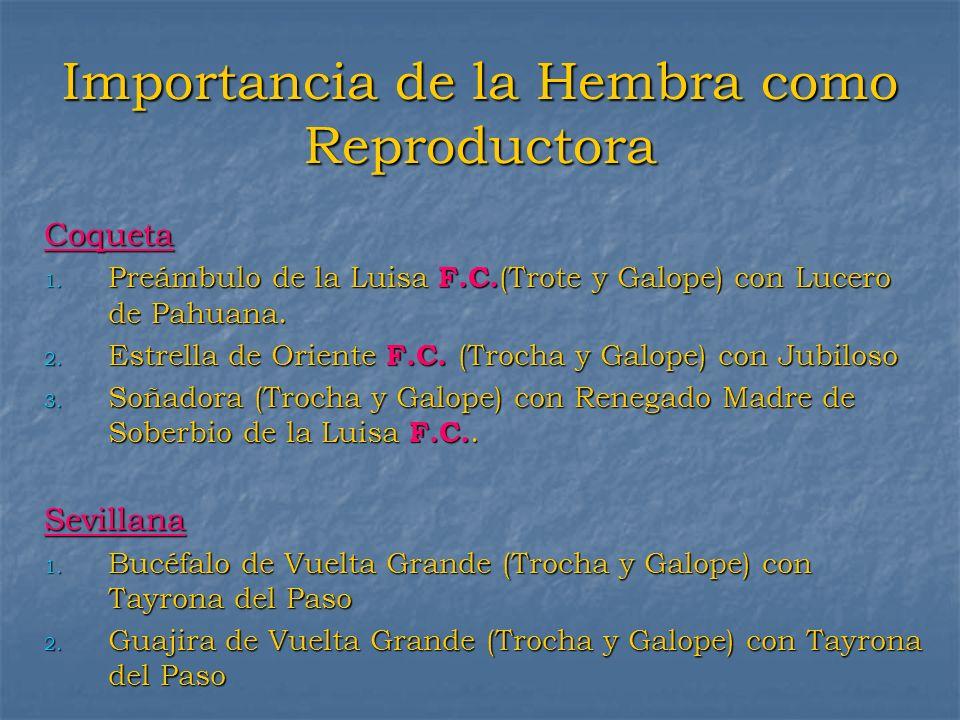 Importancia de la Hembra como Reproductora Coqueta 1. Preámbulo de la Luisa F.C. (Trote y Galope) con Lucero de Pahuana. 2. Estrella de Oriente F.C. (