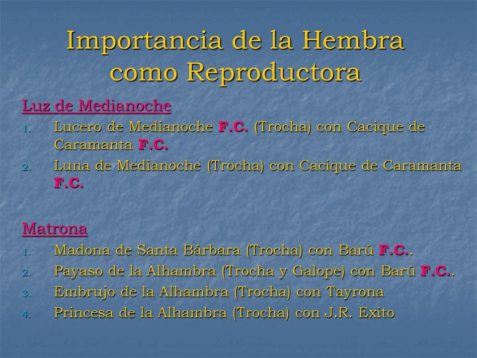 Importancia de la Hembra como Reproductora Luz de Medianoche 1. Lucero de Medianoche F.C. (Trocha) con Cacique de Caramanta F.C. 2. Luna de Medianoche