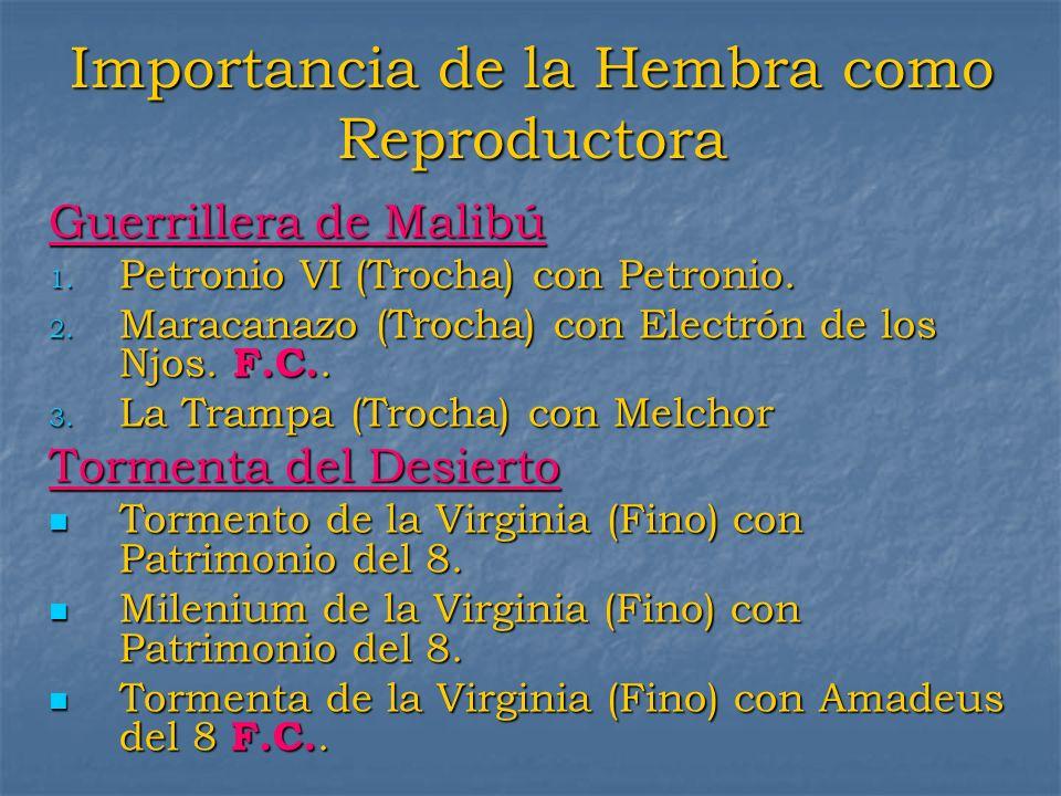 Importancia de la Hembra como Reproductora Guerrillera de Malibú 1. Petronio VI (Trocha) con Petronio. 2. Maracanazo (Trocha) con Electrón de los Njos