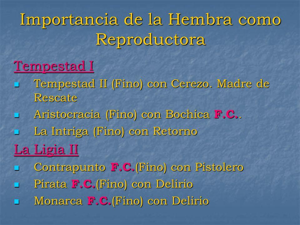 Importancia de la Hembra como Reproductora Tempestad I Tempestad II (Fino) con Cerezo. Madre de Rescate Tempestad II (Fino) con Cerezo. Madre de Resca