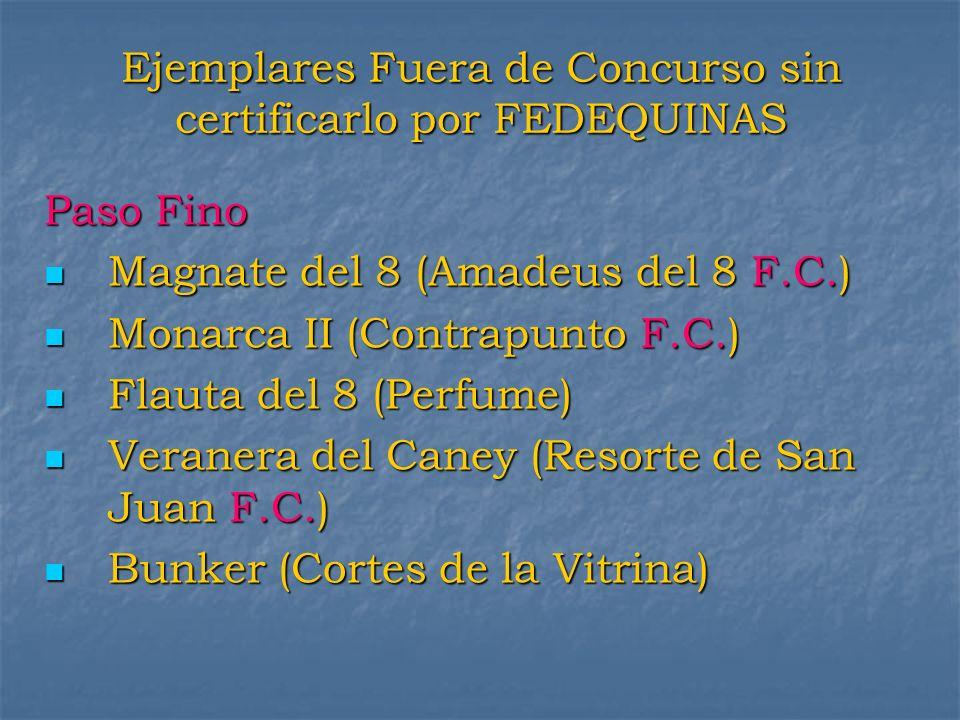 Ejemplares Fuera de Concurso sin certificarlo por FEDEQUINAS Paso Fino Magnate del 8 (Amadeus del 8 F.C.) Magnate del 8 (Amadeus del 8 F.C.) Monarca I