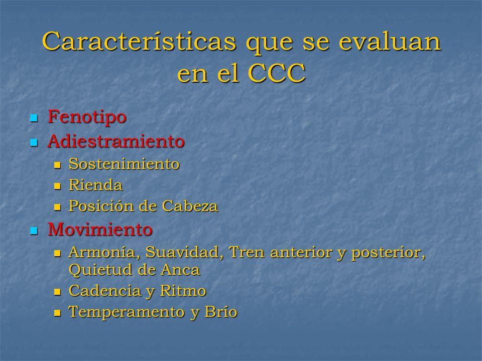 Características que se evaluan en el CCC Fenotipo Fenotipo Adiestramiento Adiestramiento Sostenimiento Sostenimiento Rienda Rienda Posición de Cabeza