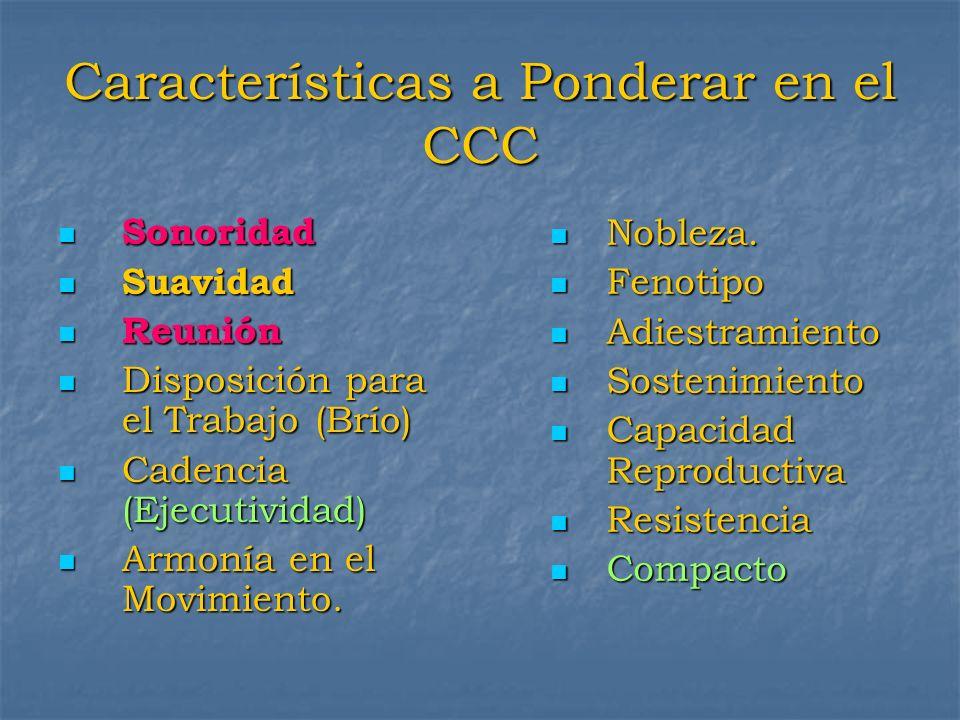 Características a Ponderar en el CCC Sonoridad Sonoridad Suavidad Suavidad Reunión Reunión Disposición para el Trabajo (Brío) Disposición para el Trab