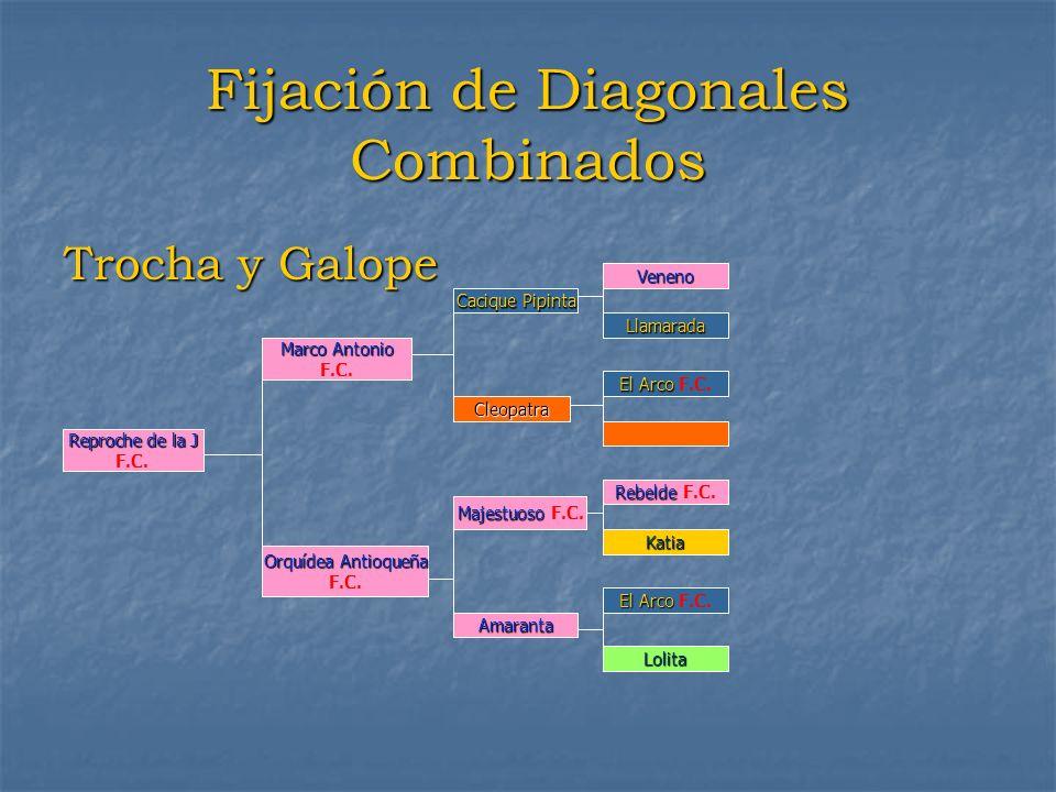 Fijación de Diagonales Combinados Trocha y Galope Reprochedela J Reproche de la J F.C. Marco Antonio F.C. Orquídea Antioqueña F.C. Cacique Pipinta Cle