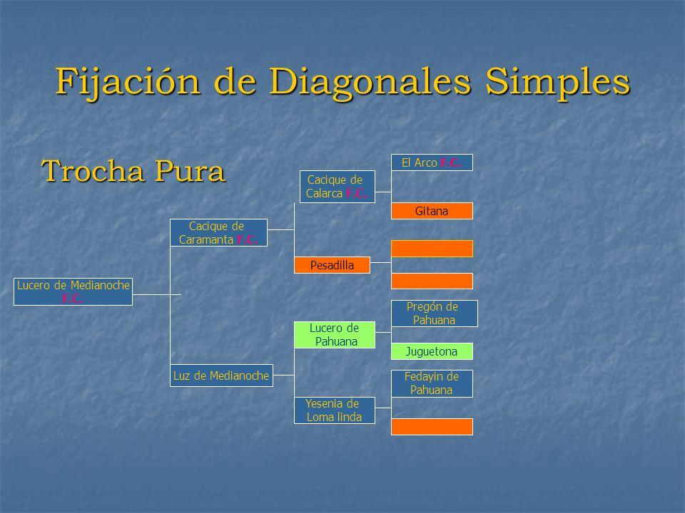 Fijación de Diagonales Simples Trocha Pura Lucero de Medianoche F.C. Cacique de Caramanta F.C. Luz de Medianoche Cacique de Calarca F.C. Pesadilla Luc