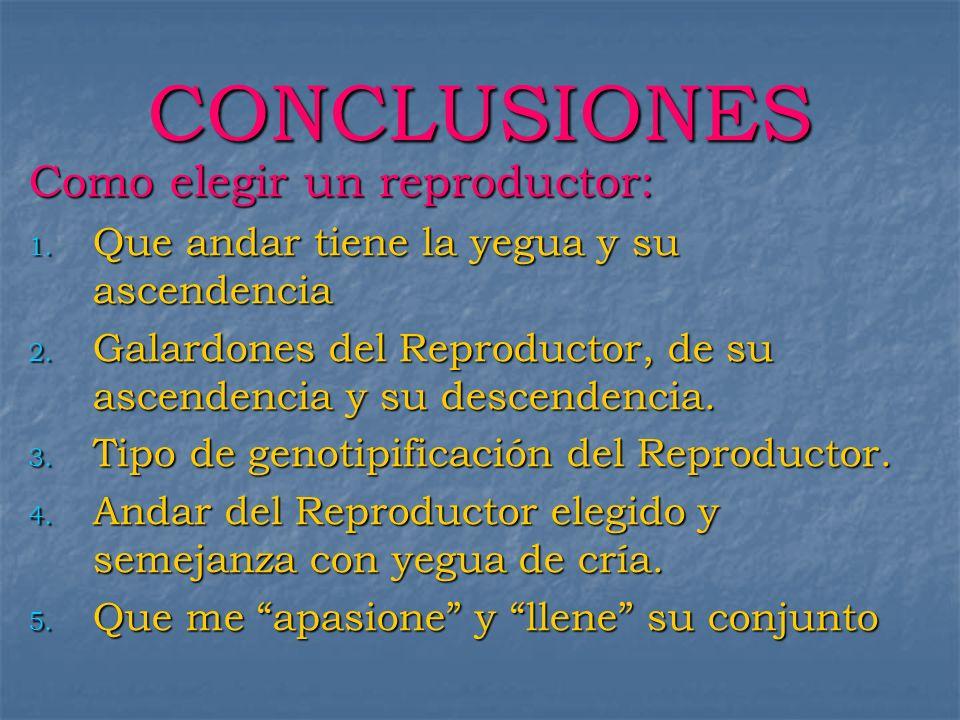 CONCLUSIONES Como elegir un reproductor: 1. Que andar tiene la yegua y su ascendencia 2. Galardones del Reproductor, de su ascendencia y su descendenc