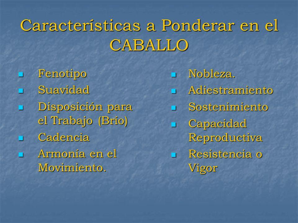 Características a Ponderar en el CABALLO Fenotipo Fenotipo Suavidad Suavidad Disposición para el Trabajo (Brío) Disposición para el Trabajo (Brío) Cad