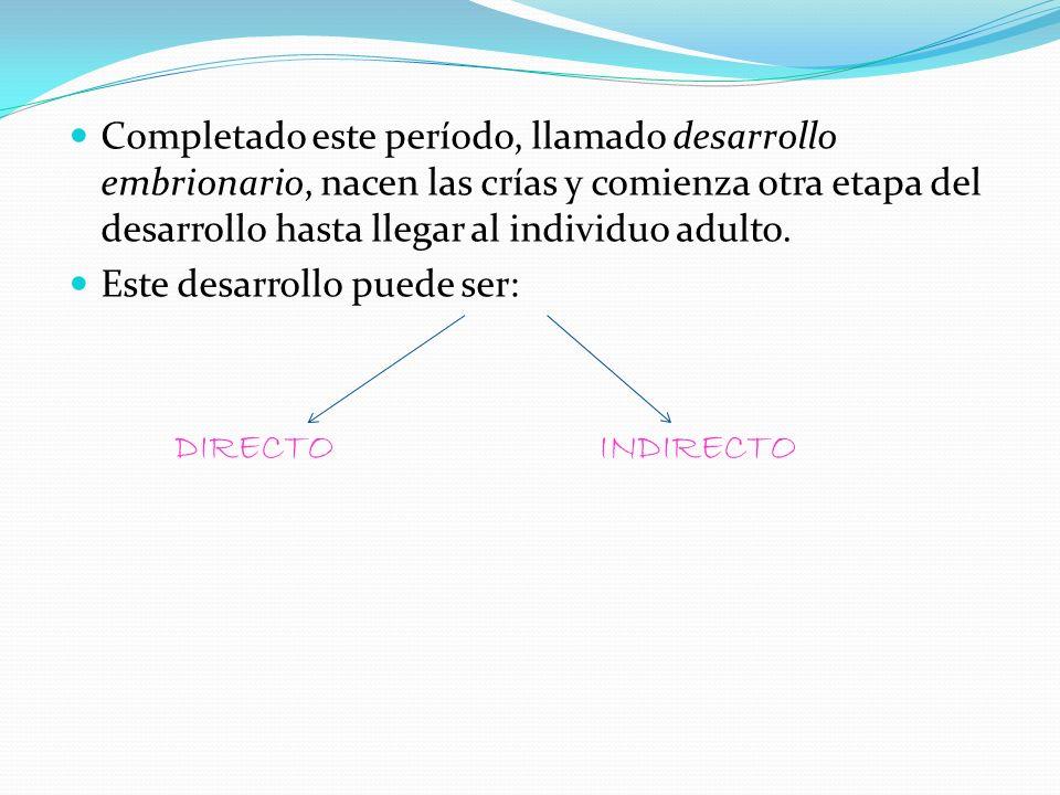 Completado este período, llamado desarrollo embrionario, nacen las crías y comienza otra etapa del desarrollo hasta llegar al individuo adulto. Este d
