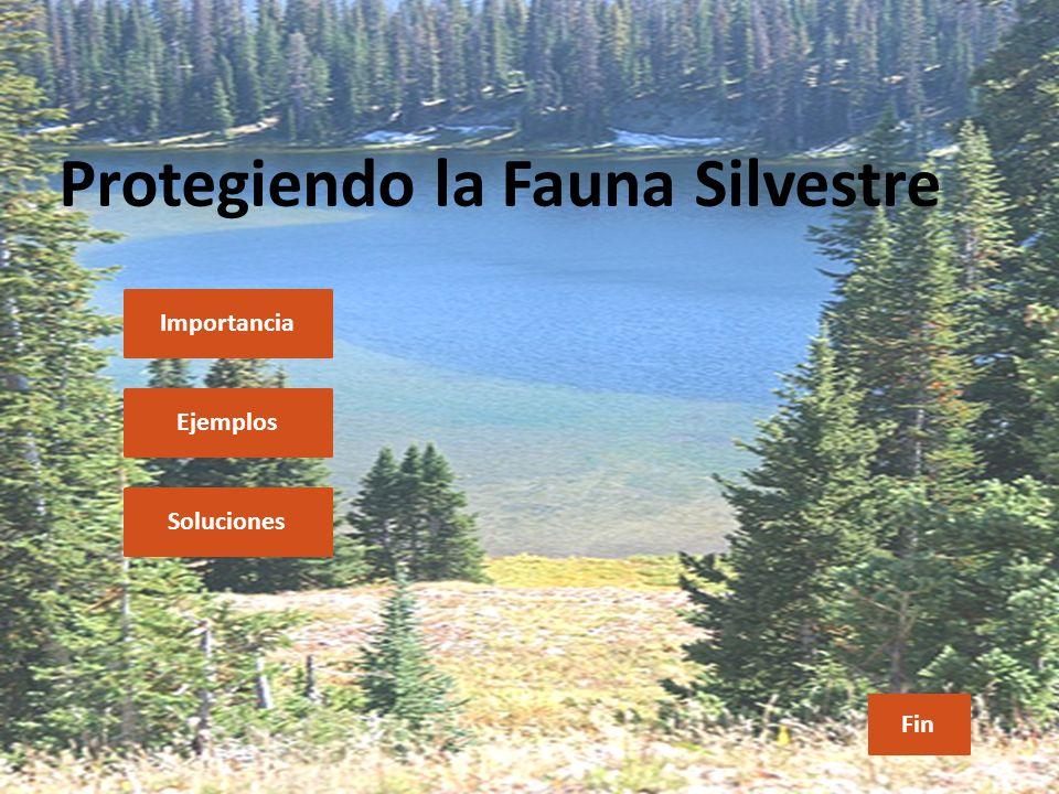 Protegiendo la Fauna Silvestre Importancia Ejemplos Soluciones Fin