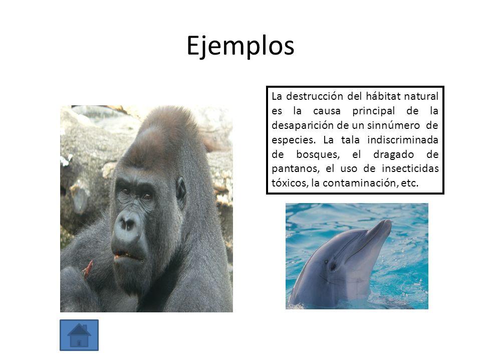 Ejemplos La destrucción del hábitat natural es la causa principal de la desaparición de un sinnúmero de especies. La tala indiscriminada de bosques, e