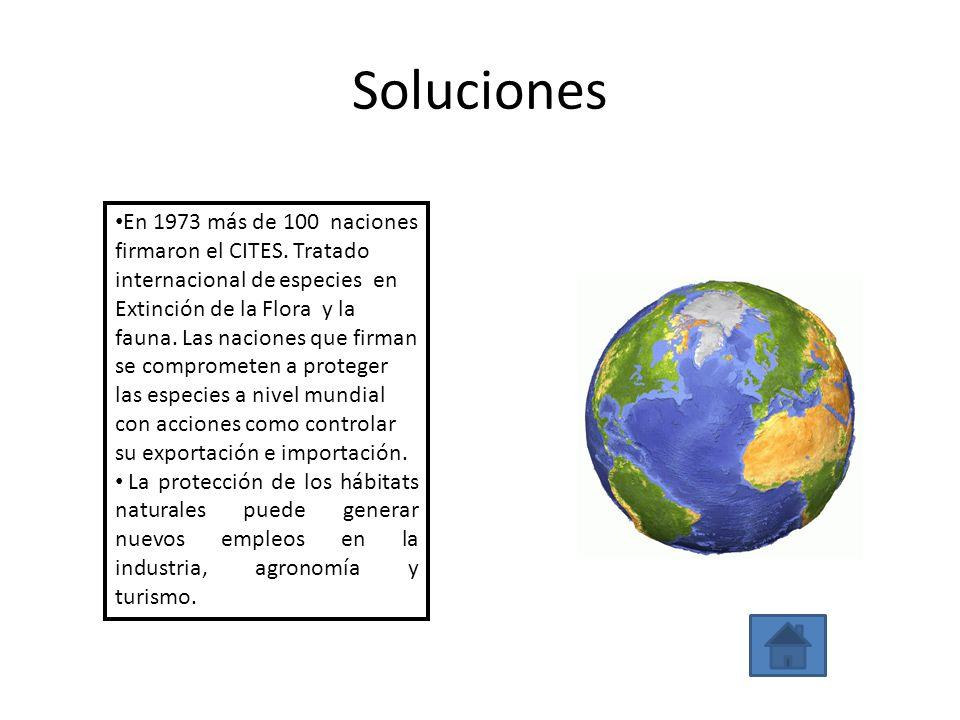 Soluciones En 1973 más de 100 naciones firmaron el CITES. Tratado internacional de especies en Extinción de la Flora y la fauna. Las naciones que firm