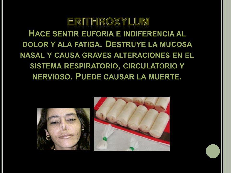 Alcohol. Erithroxylum (cocaína y crack). Drogas de sintéticas (LSD, éxtasis, anfetaminas). Opiáceos (Heroína, Morfina).AnfetaminasPsilocibina Benzodia
