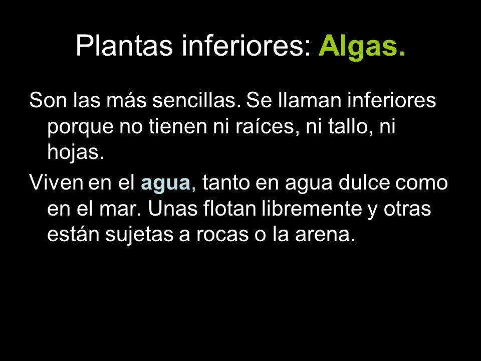 Plantas inferiores: Algas. Son las más sencillas. Se llaman inferiores porque no tienen ni raíces, ni tallo, ni hojas. Viven en el agua, tanto en agua