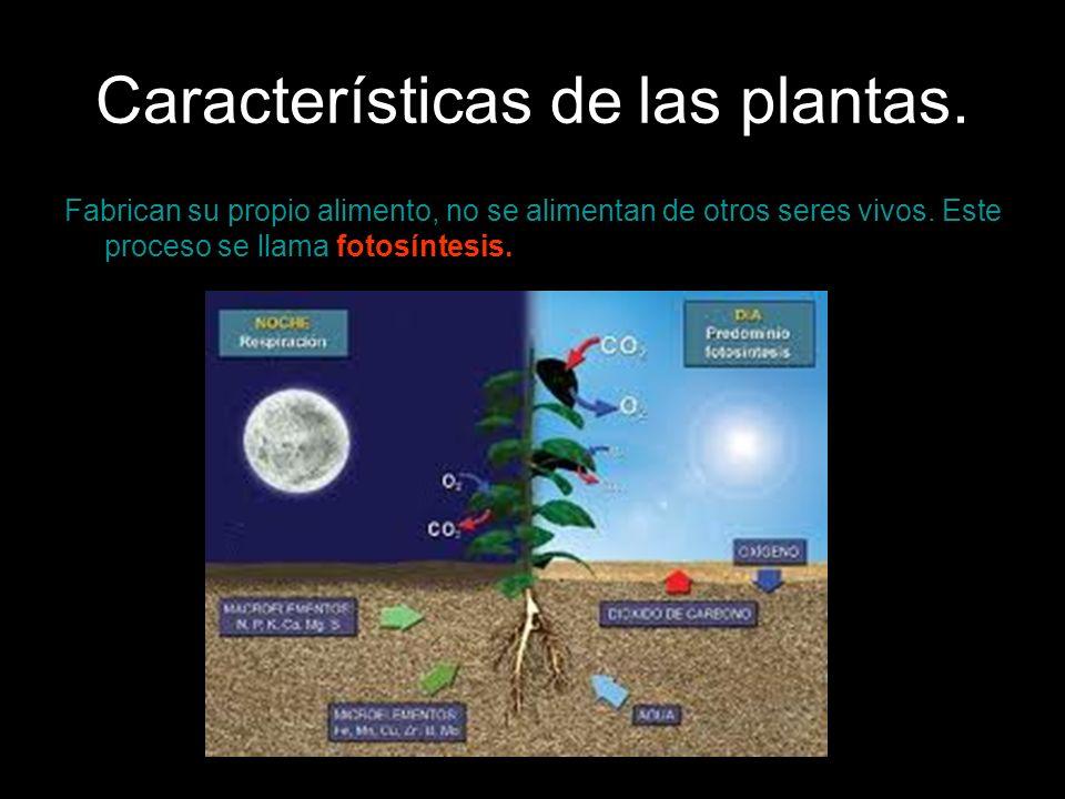 Características de las plantas. Fabrican su propio alimento, no se alimentan de otros seres vivos. Este proceso se llama fotosíntesis.
