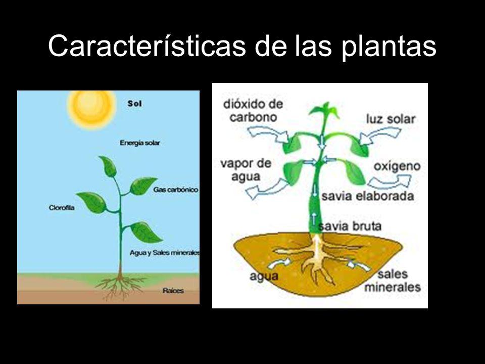Características de las plantas