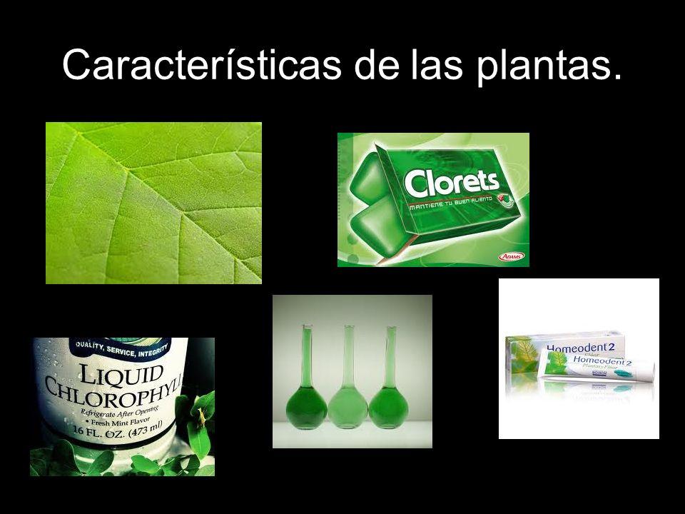 Características de las plantas No pueden desplazarse.