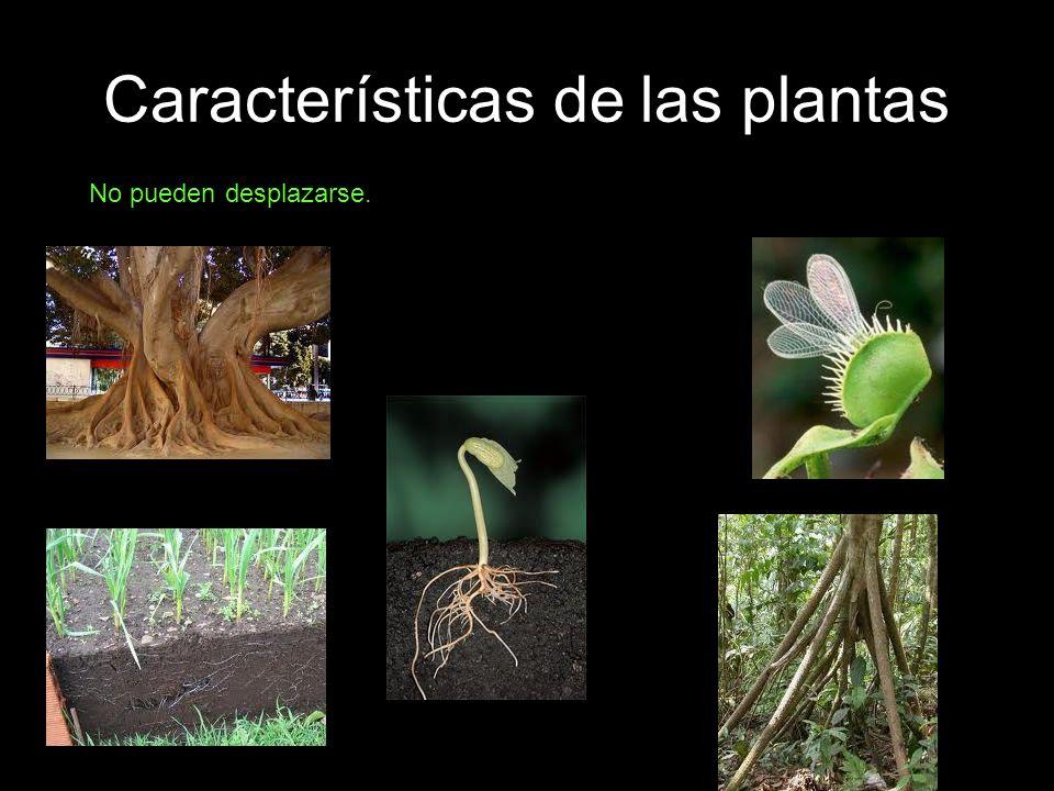 Clasificación de las plantas.PLANTAS INFERIORES: Tienen una estructura muy simple.