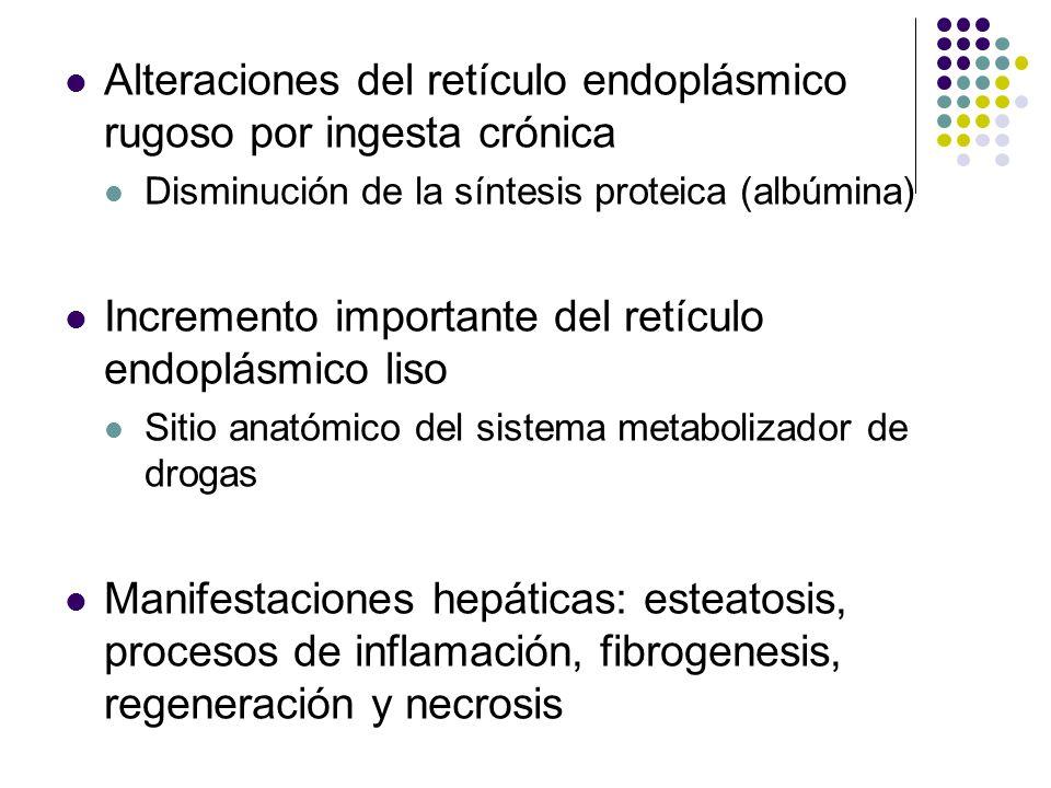 Alteraciones del retículo endoplásmico rugoso por ingesta crónica Disminución de la síntesis proteica (albúmina) Incremento importante del retículo en