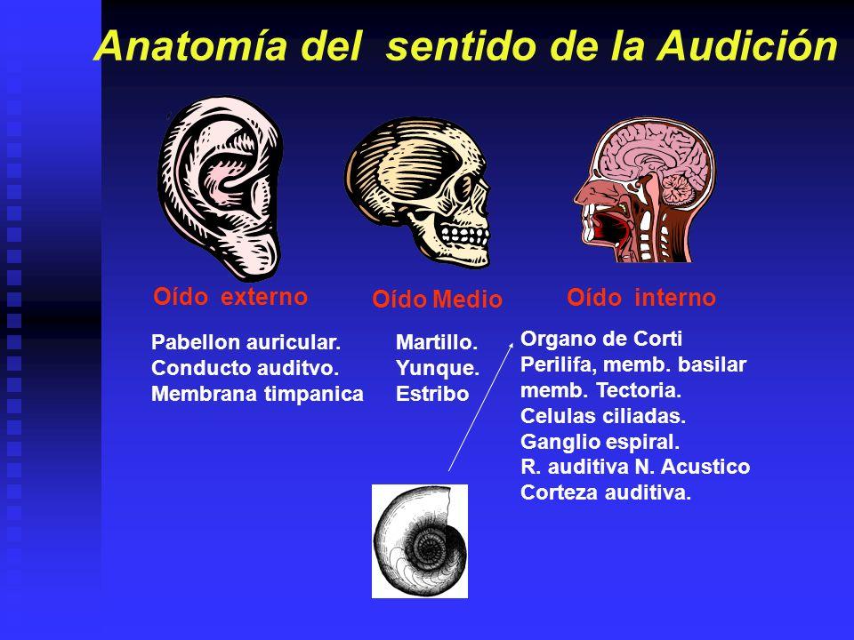 Oído Externo: El oído externo, que incluye el pabellón de la oreja y el canal auditivo externo, está separado del oído medio por una estructura en forma de disco llamada membrana timpánica (tímpano).