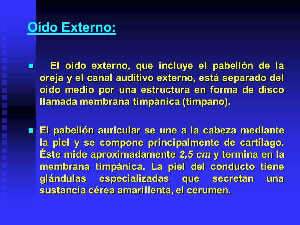 Oído Externo: El oído externo, que incluye el pabellón de la oreja y el canal auditivo externo, está separado del oído medio por una estructura en for