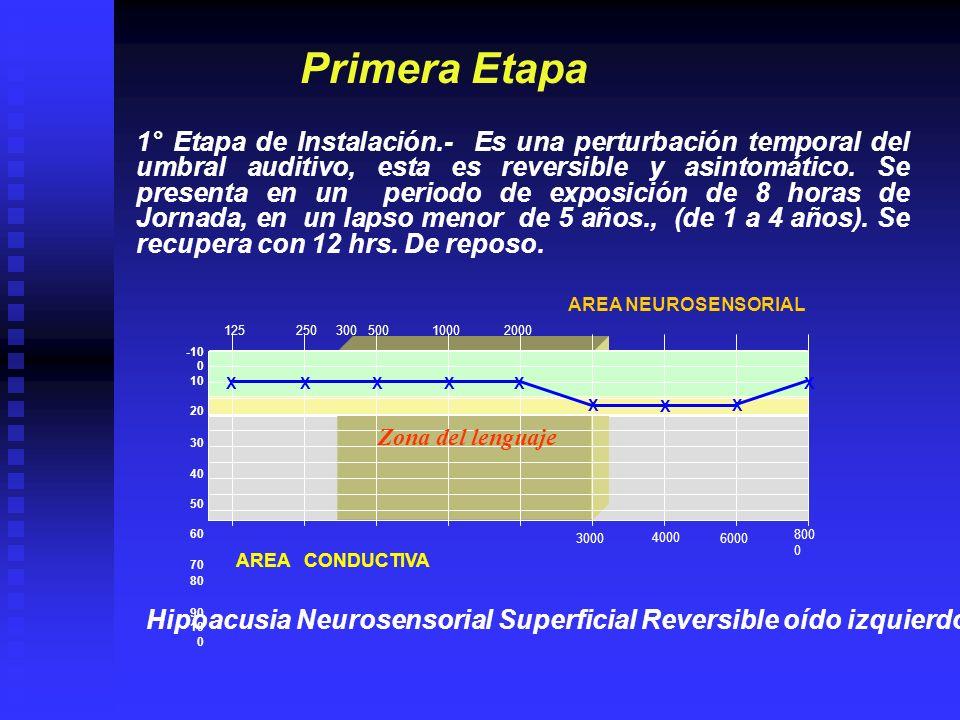 12525050010002000 4000 800 0 30006000 -10 0 10 20 30 40 50 60 70 80 90 10 0 AREA CONDUCTIVA AREA NEUROSENSORIAL Segunda Etapa 2da.