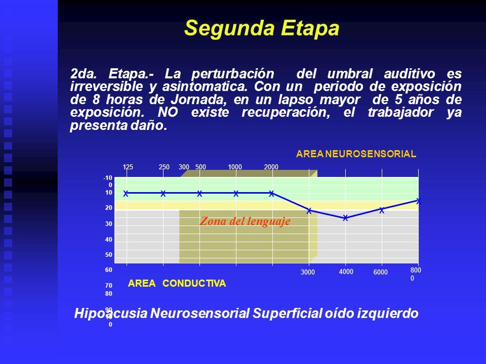 12525050010002000 4000 800 0 30006000 -10 0 10 20 30 40 50 60 70 80 90 10 0 AREA CONDUCTIVA AREA NEUROSENSORIAL Tercera Etapa 3era.