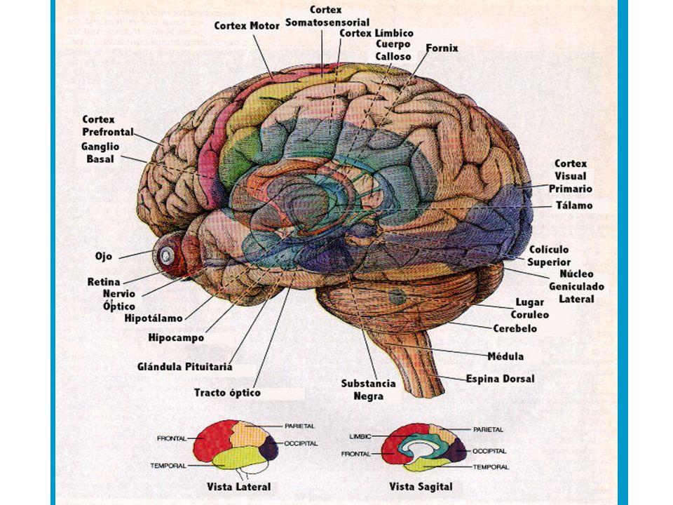 Es muy común que a simple vista la PNL, nos hace pensar en una computadora a la que se le ingresan datos, donde la fuente es el cerebro