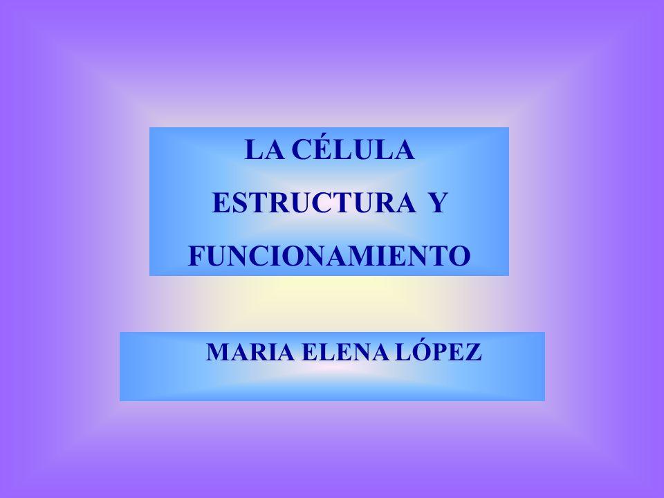 LA CÉLULA ESTRUCTURA Y FUNCIONAMIENTO MARIA ELENA LÓPEZ